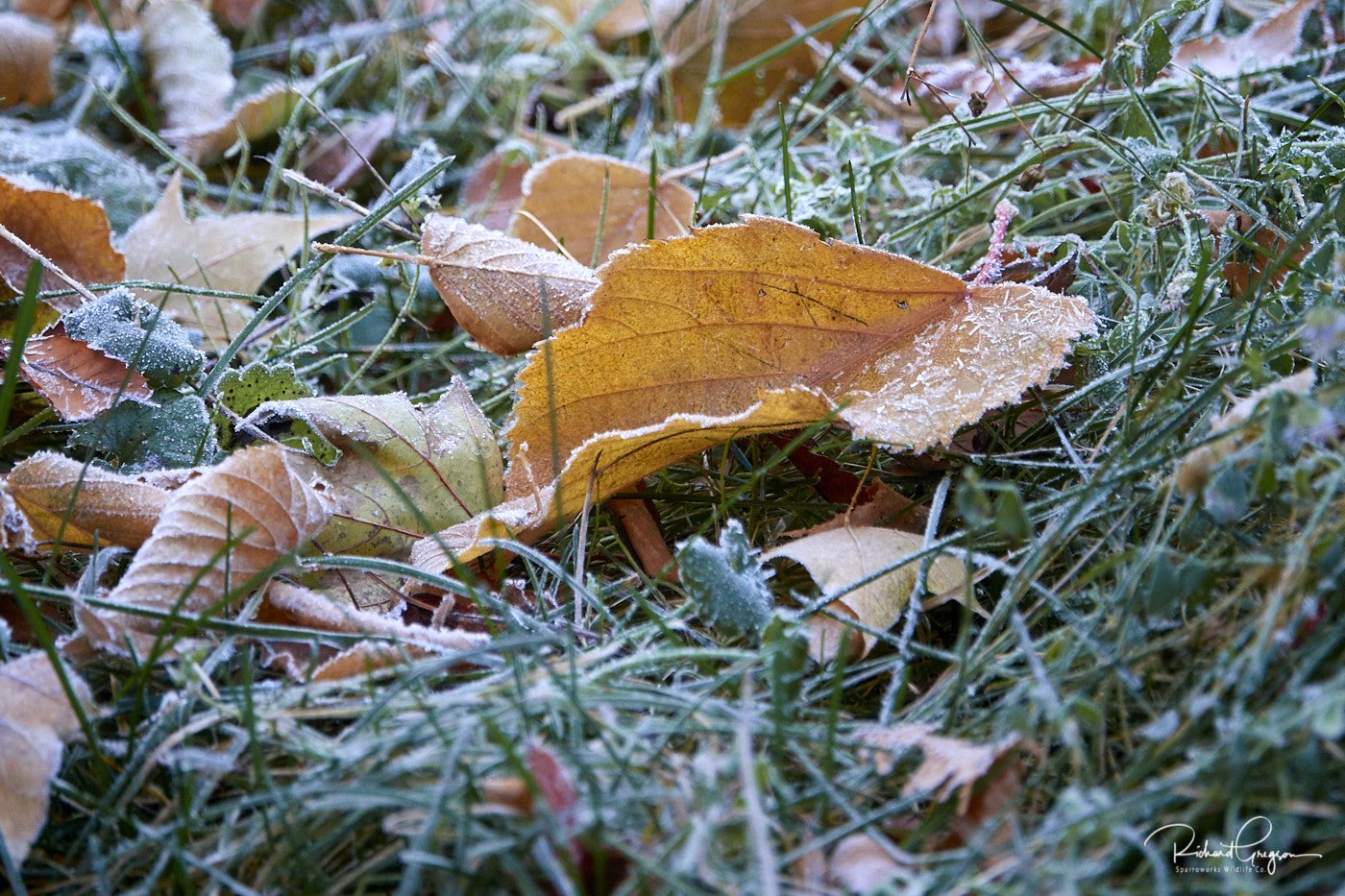 We Have Frost